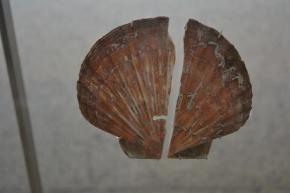Die Muschel als Grabbeigabe oft in Verbindung mit rotem Ocker gehört seit dem Paläolithikum zum Wiedergeburtsglauben von Gott der MUTTER. Hier eine Muschelbeigabe von Mulier-Homo neanderthalensis, 50 000 v.u.Z. aus Murcia, Spanien